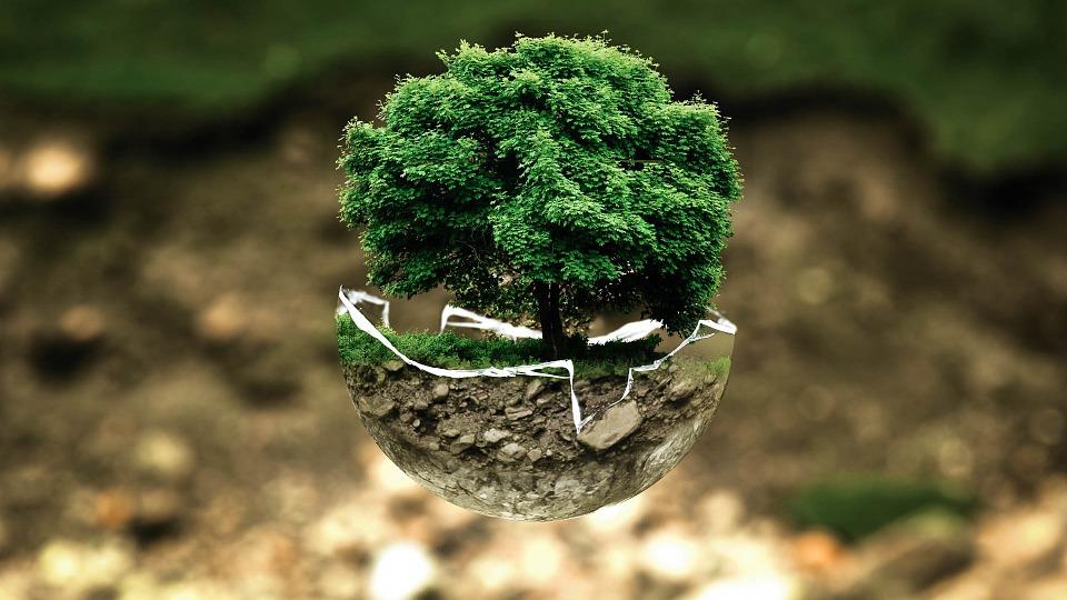 Macintosh HD:Users:Yasmine:Desktop:bonsai.jpg
