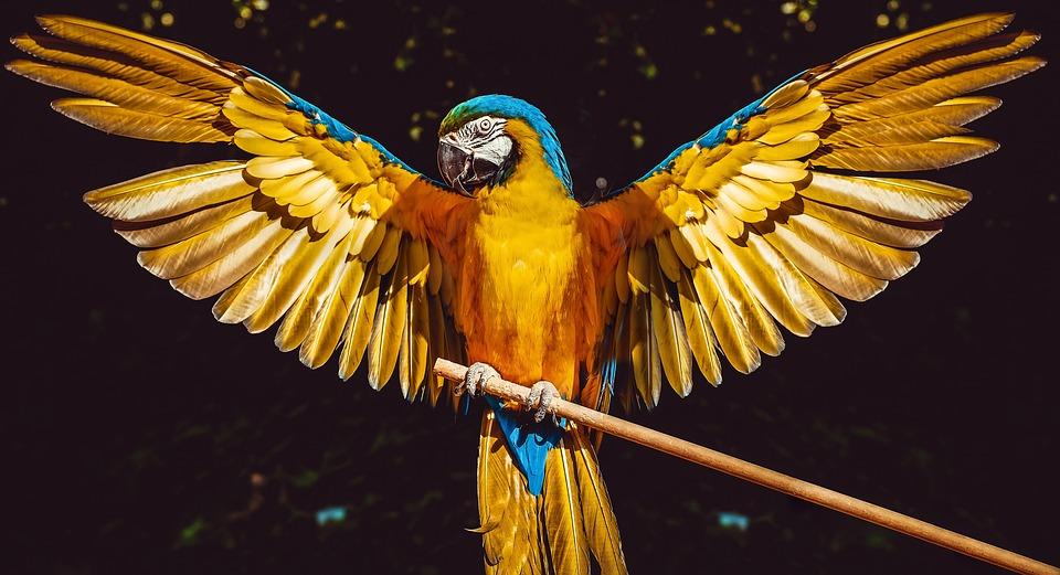 Macintosh HD:Users:Yasmine:Desktop:parrot wings.jpg