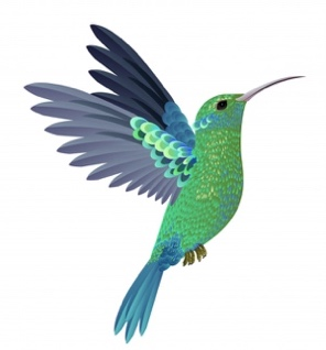 """Résultat de recherche d'images pour """"colibris"""""""
