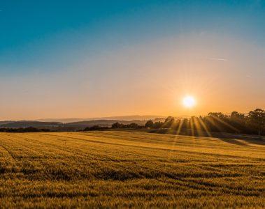 Une image contenant ciel, herbe, extérieur, champ Description générée automatiquement